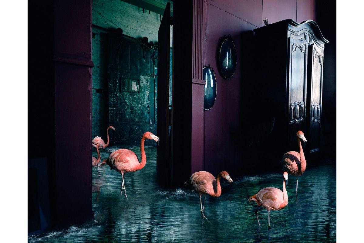 Wanderng Flamingos